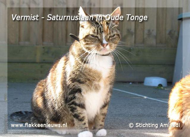 Foto behorende bij Gevonden en vermiste huisdieren week 27-2009
