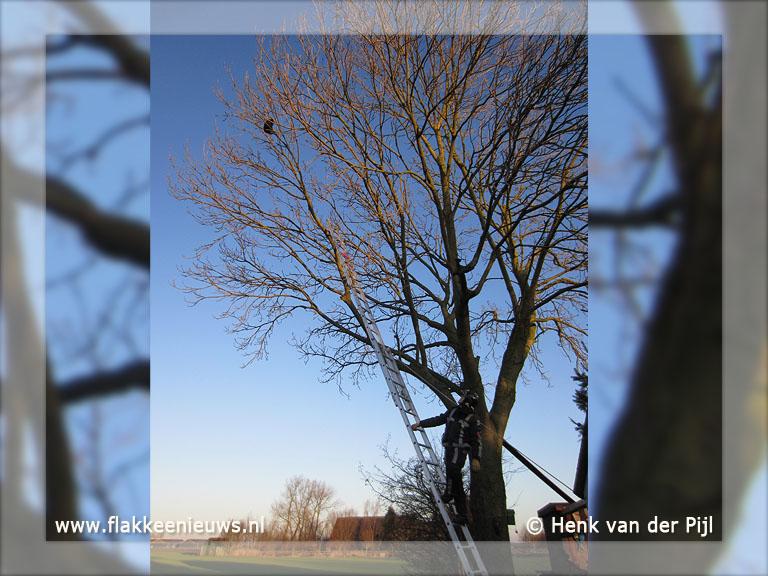 Foto behorende bij Brandweer helpt kat uit de boom