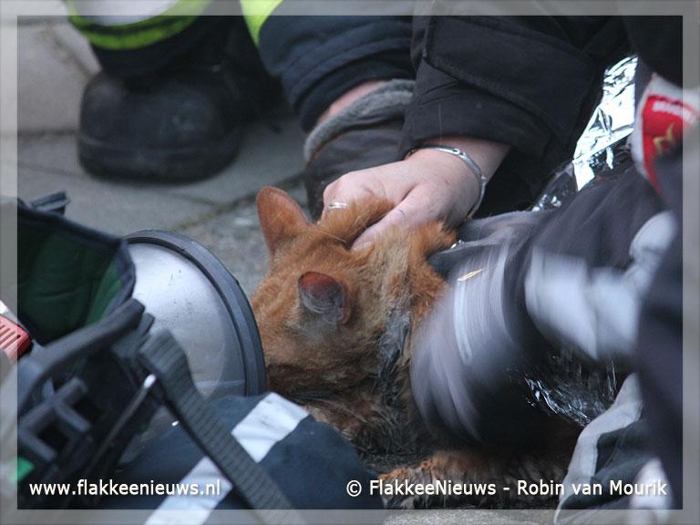 Foto behorende bij Brandweer haalt kat uit brandende woning