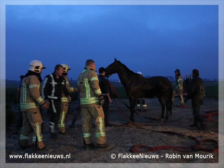 Foto behorende bij Paard met veel mankracht uit de sloot gered