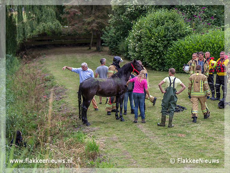 Foto behorende bij Veel hulpdiensten naar een paard te water