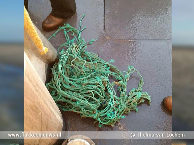 Foto behorende bij KNRM schiet zeehond te hulp