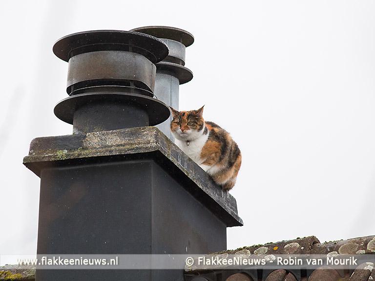 Foto behorende bij Kat met hoogwerker van dak gered