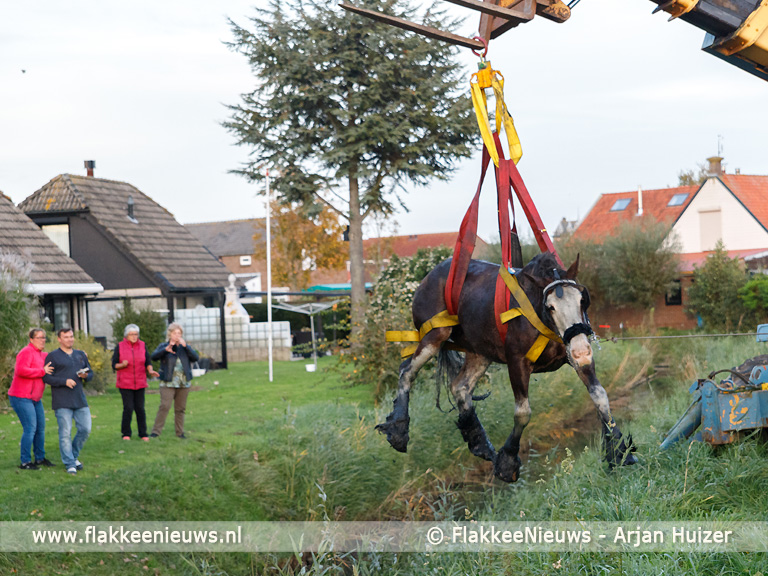Foto behorende bij Grote hulpverlening voor ongeval met paard