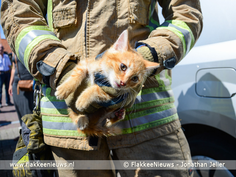 Foto behorende bij Kitten is hulpverleners bijna te slim af