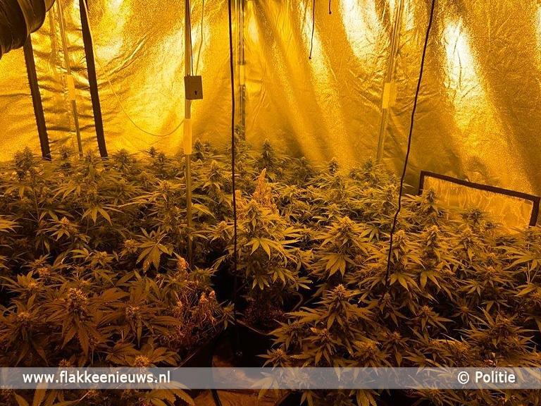 Foto behorende bij Politie op zoek naar hennepteelt op Goeree-Overflakkee