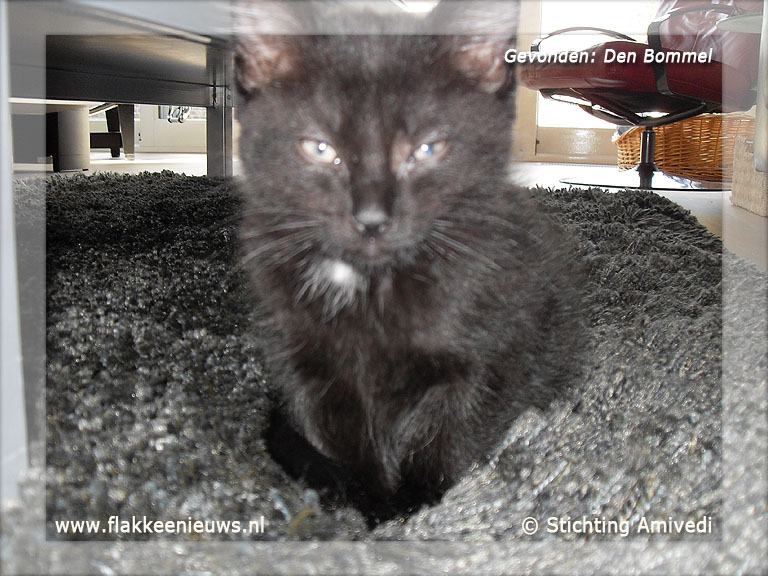 Foto behorende bij Gevonden en vermiste huisdieren week 25-2012