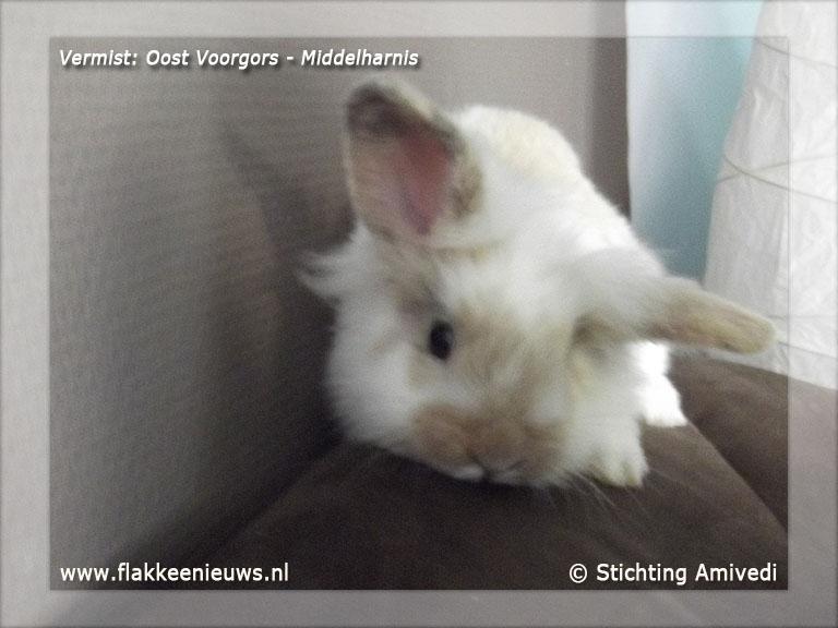 Foto behorende bij Gevonden en vermiste huisdieren week 04-2012