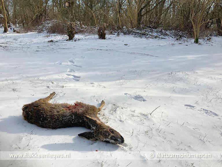 Foto behorende bij Weer ree doodgebeten, boswachters bezorgd